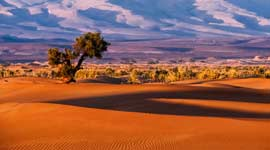 Single Reizen naar Afrika