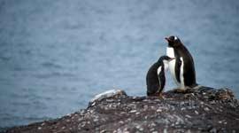 Singlereizen naar Antarctica