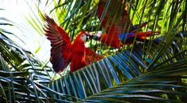 Avontuurlijke Rondreizen en Fietsvakantie Costa Rica