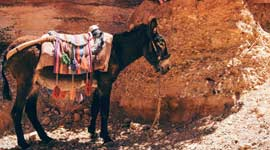 Groepsreizen Jordanië