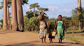 Avontuurlijke Vakantie naar Madagascar en Mauritius