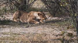 Single Kampeer- en Lodge Reis Namibië
