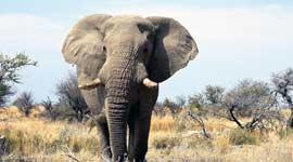 ANWB Single Reizen naar Namibië, Botswana en Zimbabwe