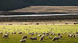 Avontuurlijke Singlereizen Nieuw-Zeeland