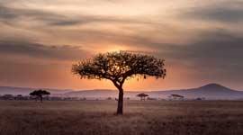 Singlereizen naar Zuid-Afrika