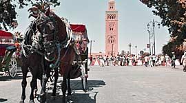 marokko singlereizen