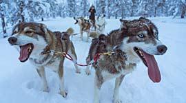 winterreizen in lapland